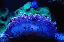 Coral azul y verde bajo el agua, fondo oscuro - foto de stock