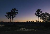 Silueta de las palmeras - foto de stock