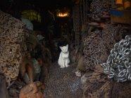 Білий кіт у магазин — стокове фото