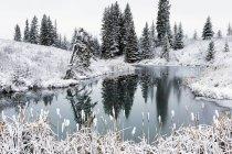 Откройте пруд в зимний период — стоковое фото