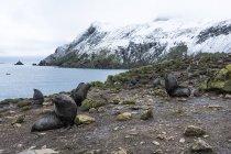 Foglie di pelo antartico — Foto stock