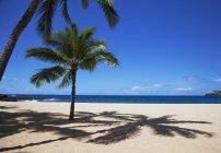 Дерево пальми на Сонячний і порожні пляжі — стокове фото