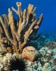 Primer plano de Paracirrhites forsteri amarillo nadando bajo el agua cerca de los corales - foto de stock