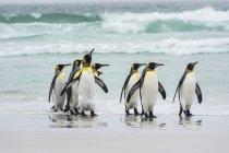 Пінгвіни на пляжі. — стокове фото