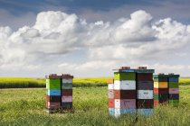 Bienenstock gestapelt — Stockfoto