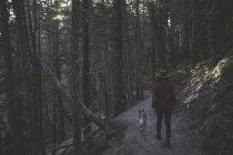 Mujer va de excursión con su perro en un sendero en el bosque, Girdwood, Southcentral Alaska - foto de stock