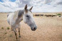 Кінь з корів у фоновому режимі — стокове фото