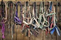 Wall full of hanging horse halters in Cecil County; Maryland, Estados Unidos da América — Fotografia de Stock
