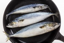 Top view of mackerel fish in cast iron skillet over white background — Stock Photo