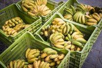 Коробки з бананів на Меркадо да Graca — стокове фото