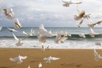 Stormo di uccelli bianchi prende il volo — Foto stock