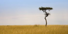Masai Mara, Kenya — Stock Photo