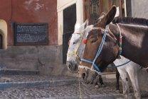 Cavalli, Fira, Santorini, Grecia — Foto stock