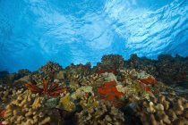 Arrecife submarino durante el día - foto de stock