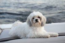 Собака сервіровка води — стокове фото