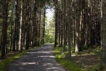 Дорога в лес недалеко в дневное время — стоковое фото