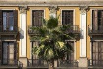Дерево пальми проти будівлі — стокове фото