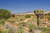 Joshua Tree And Tehachapi Mountains — Stock Photo