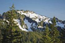 Forêt de montagne avec la montagne — Photo de stock