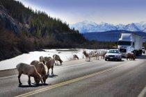 Дикой природы на шоссе в горах — стоковое фото