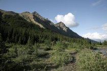Jaspis Nationalpark, Alberta — Stockfoto