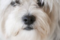 Snout Of A White Dog — Stock Photo
