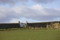 Каменный забор на зеленом травяном поле — стоковое фото
