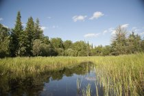 Lake Of Woods in Ontario — Stock Photo