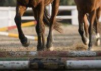 Низький розділу запуск коней — стокове фото