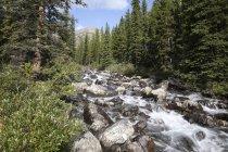 Jasper national park, alberta, Canadá — Fotografia de Stock