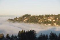 Фогги долины и горы — стоковое фото