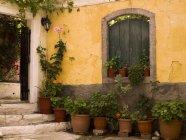 Plantes en pot à l'extérieur — Photo de stock