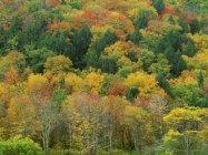 Bosque en otoño en Usa - foto de stock