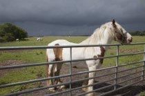 Horse Near A Fence — Stock Photo