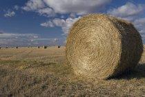 Hay Bales In Autumn — Stock Photo