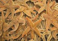 Estrella de mar seca en un mercado callejero - foto de stock