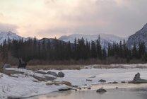 Banff, alberta, kanada — Stockfoto