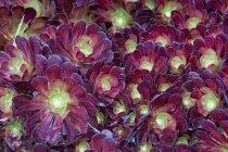 Grande plante exotique — Photo de stock