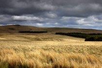 Поле пшеницы с темные облака — стоковое фото
