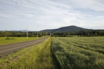 Country Road surrounded by grass — Stock Photo