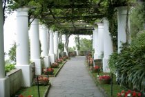 Ivy-Lined Pillars — Stock Photo