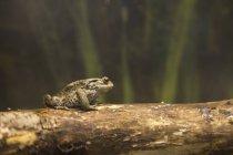 Жаба на регистрации — стоковое фото