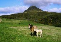 Cavalos em Diamond Hill — Fotografia de Stock