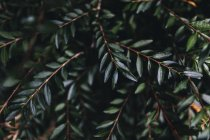 View of tree twigs with green leaves with blurred background — Stock Photo