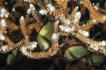 Vista de pequeños peces verdes escondidos en plantas marinas bajo el agua - foto de stock