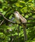 Pájaro pequeño sentado en la rama contra hojas de color verde durante el día - foto de stock