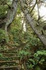 Сходи ведуть по горбах в ліс, Мис Скотт Провінційний парк, острів Ванкувер; Британська Колумбія, Канада — стокове фото