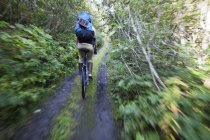 A Woman Mountain Bikes Down A Trail In A Forest With A Backpack; Alaska, United States of America — стоковое фото