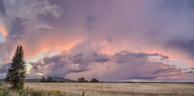 Dramatic Pink Glow In Storm Clouds Over A Field At Sunset; Thunder Bay, Ontario, Canada — Stock Photo