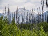 Зростаючий з трав і рослин з гори на фоні дерев — стокове фото